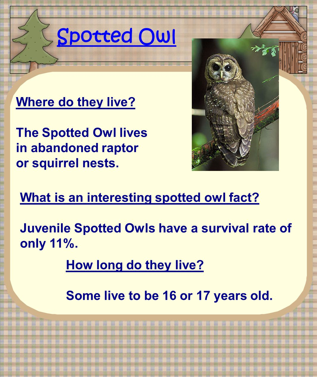 Spotted Owl Where do they live. The Spotted Owl lives in abandoned raptor or squirrel nests.
