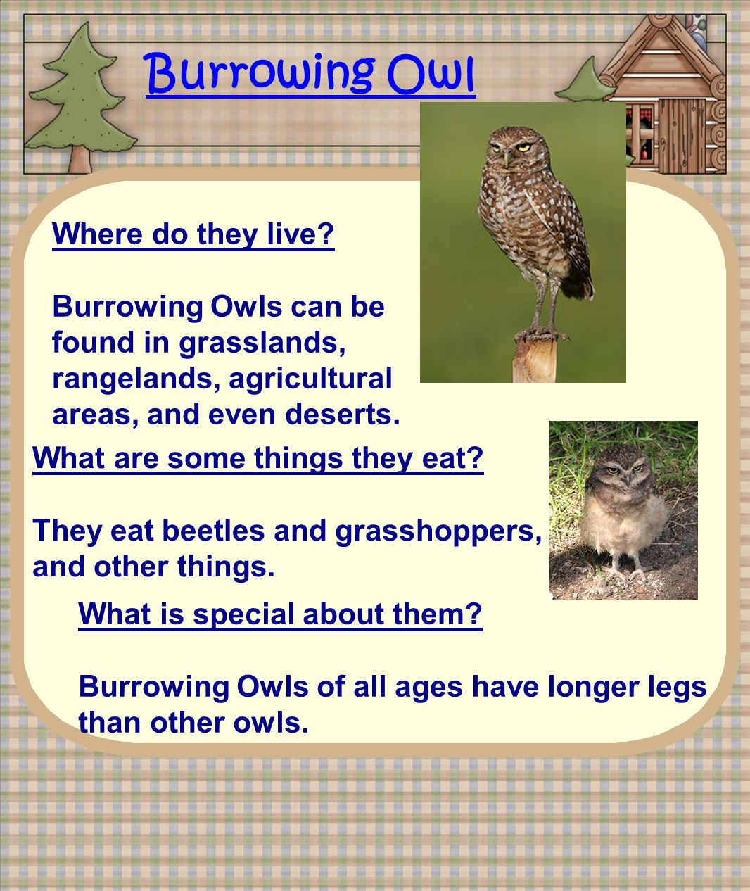 Burrowing Owl Where do they live? Burrowing Owls can be found in grasslands, rangelands, agricultural areas, and even deserts. What are some things th