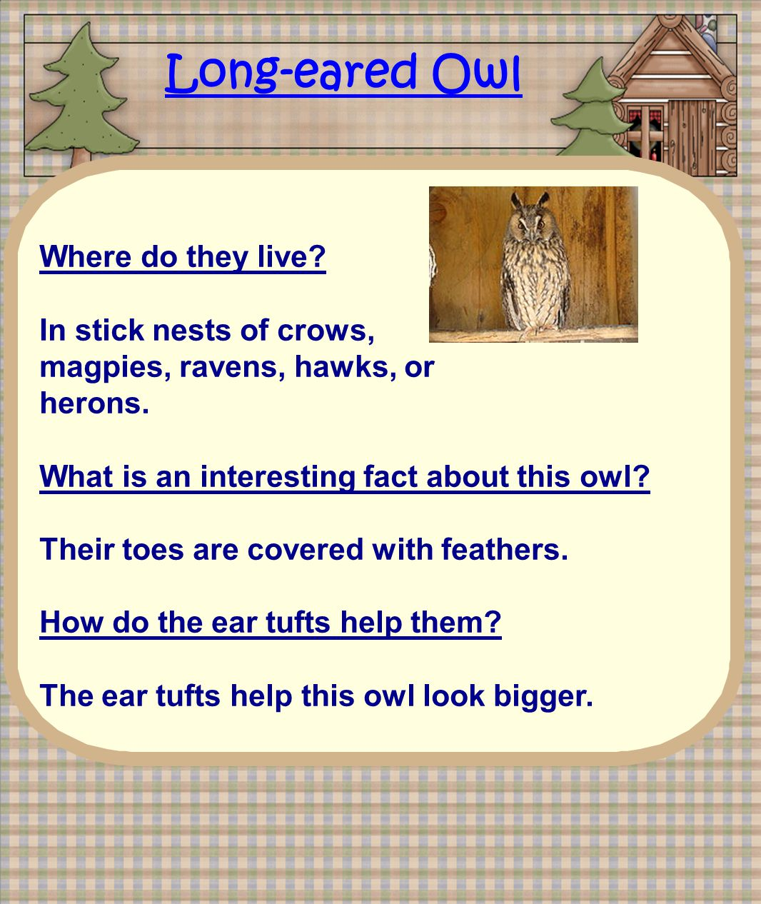 Long-eared Owl Where do they live. In stick nests of crows, magpies, ravens, hawks, or herons.