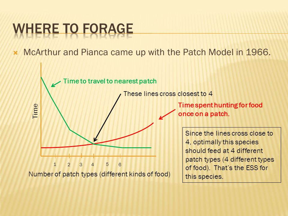  McArthur and Pianca came up with the Patch Model in 1966.