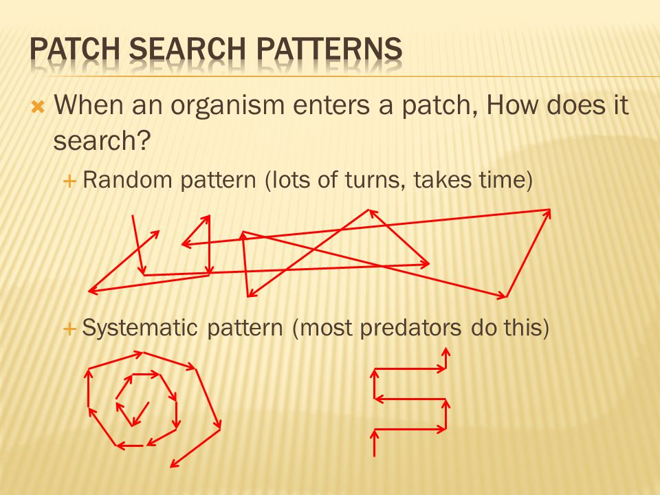  When an organism enters a patch, How does it search.