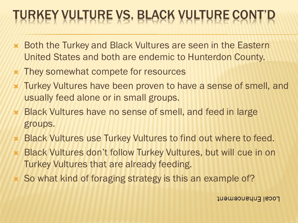  Both the Turkey and Black Vultures are seen in the Eastern United States and both are endemic to Hunterdon County.