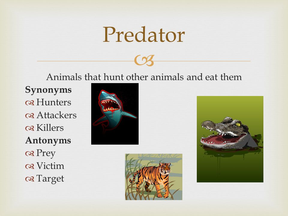  Animals that hunt other animals and eat them Synonyms  Hunters  Attackers  Killers Antonyms  Prey  Victim  Target Predator