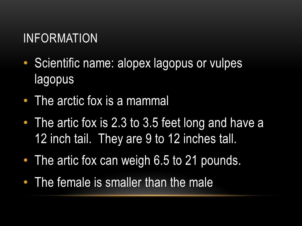 INFORMATION Scientific name: alopex lagopus or vulpes lagopus The arctic fox is a mammal The artic fox is 2.3 to 3.5 feet long and have a 12 inch tail.