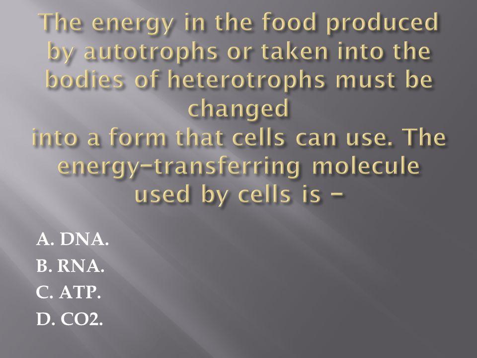 A. DNA. B. RNA. C. ATP. D. CO2.