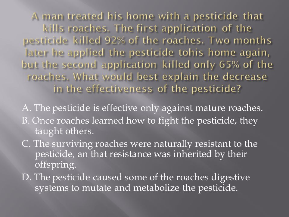 A. The pesticide is effective only against mature roaches. B. Once roaches learned how to fight the pesticide, they taught others. C. The surviving ro
