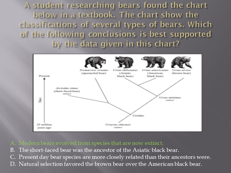 A.Modern bears evolved from species that are now extinct. B.The short-faced bear was the ancestor of the Asiatic black bear. C.Present day bear specie
