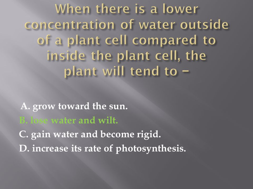 A. grow toward the sun. B. lose water and wilt. C. gain water and become rigid. D. increase its rate of photosynthesis.