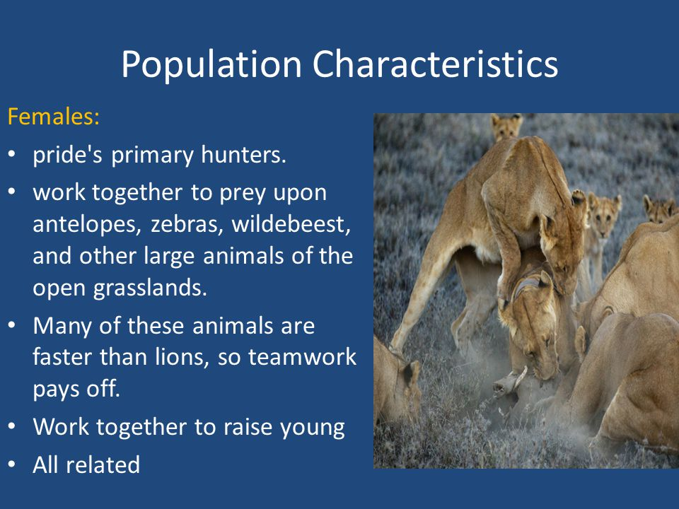 Population Characteristics Females: pride s primary hunters.