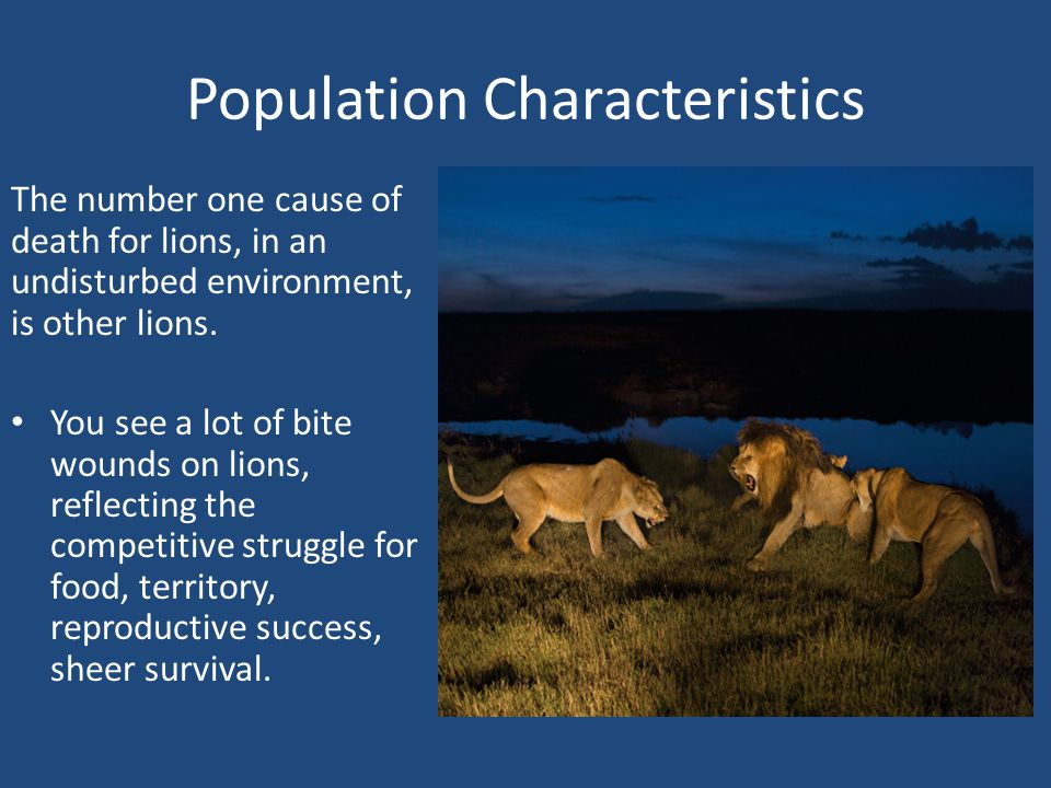 Population Characteristics The number one cause of death for lions, in an undisturbed environment, is other lions.