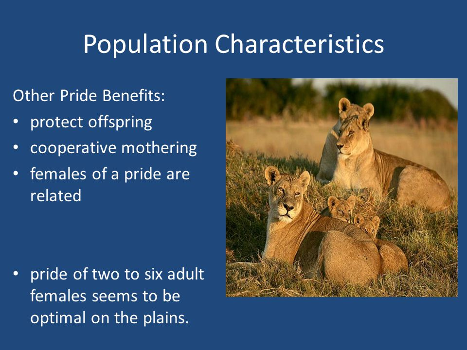 Population Characteristics Other Pride Benefits: protect offspring cooperative mothering females of a pride are related pride of two to six adult females seems to be optimal on the plains.