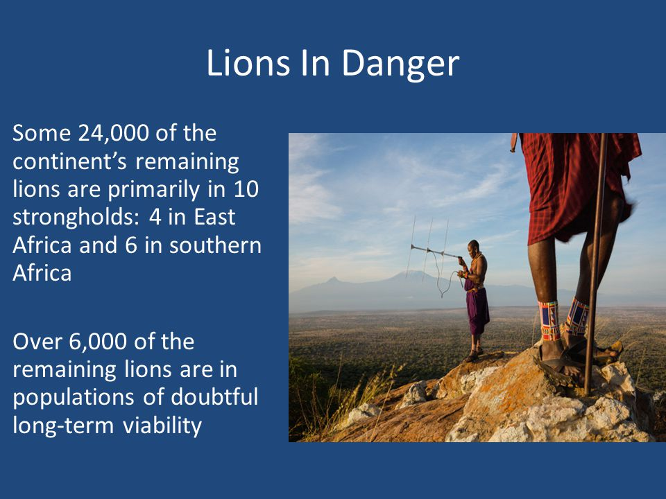 Lions In Danger Some 24,000 of the continent's remaining lions are primarily in 10 strongholds: 4 in East Africa and 6 in southern Africa Over 6,000 of the remaining lions are in populations of doubtful long-term viability