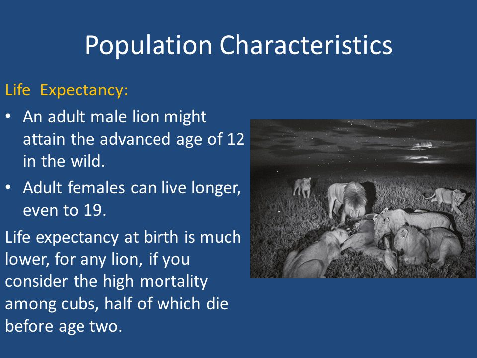 Population Characteristics Life Expectancy: An adult male lion might attain the advanced age of 12 in the wild.