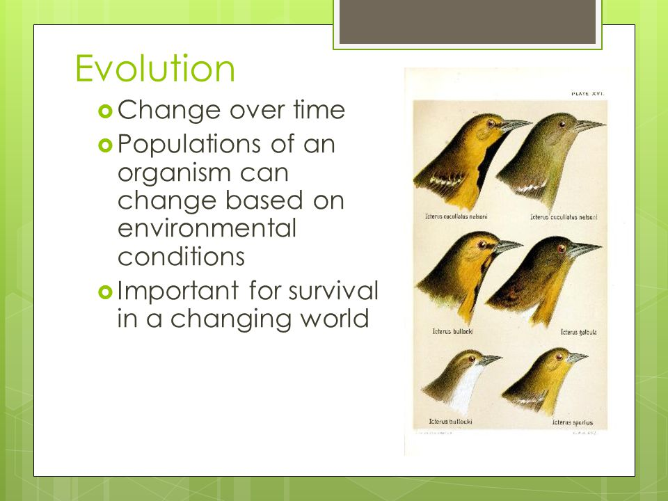 Evolution  Change over time  Populations of an organism can change based on environmental conditions  Important for survival in a changing world