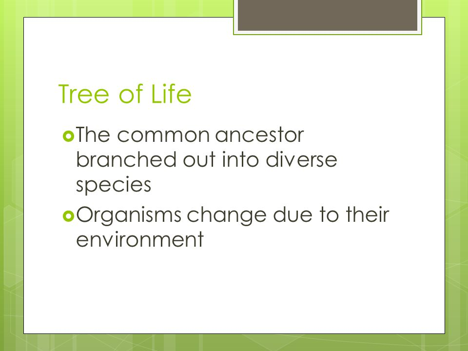 Tree of Life  The common ancestor branched out into diverse species  Organisms change due to their environment