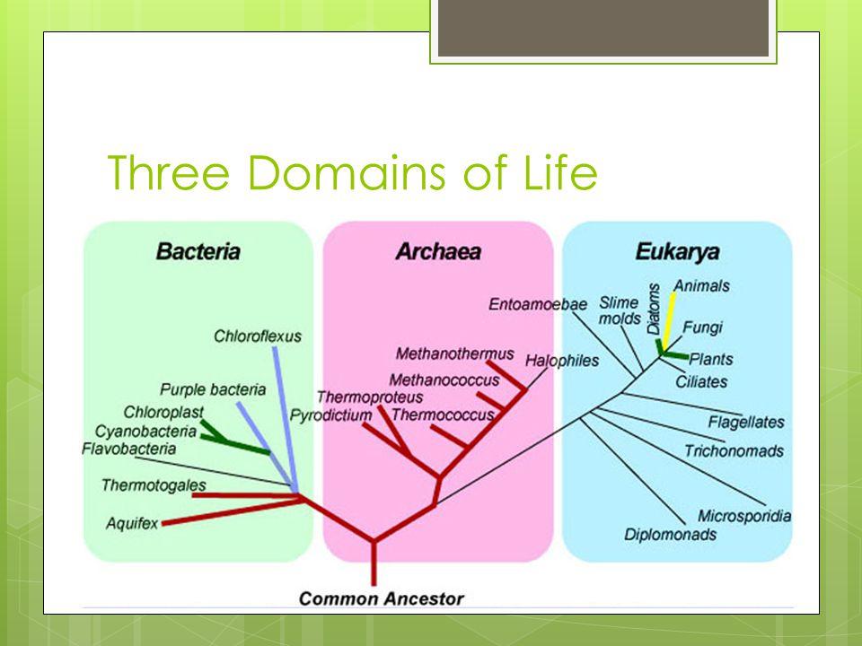 Three Domains of Life