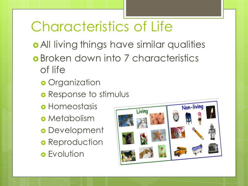 Characteristics of Life  All living things have similar qualities  Broken down into 7 characteristics of life  Organization  Response to stimulus  Homeostasis  Metabolism  Development  Reproduction  Evolution
