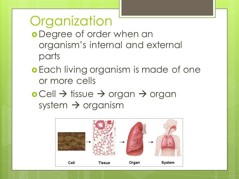 Organization  Degree of order when an organism's internal and external parts  Each living organism is made of one or more cells  Cell  tissue  organ  organ system  organism