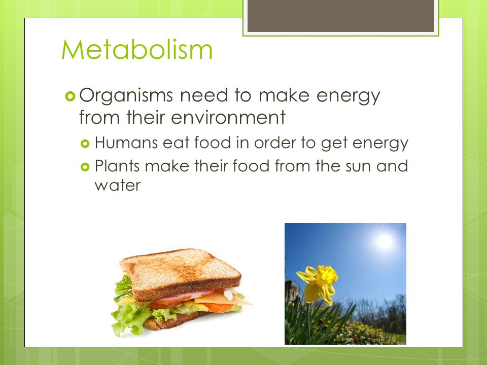 Metabolism  Organisms need to make energy from their environment  Humans eat food in order to get energy  Plants make their food from the sun and water
