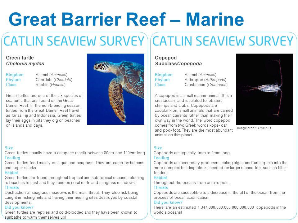 Great Barrier Reef – Marine Life Cards Copepod SubclassCopepoda KingdomAnimal (Animalia) PhylumArthropod (Arthropoda) ClassCrustacean (Crustacea) A copepod is a small marine animal.