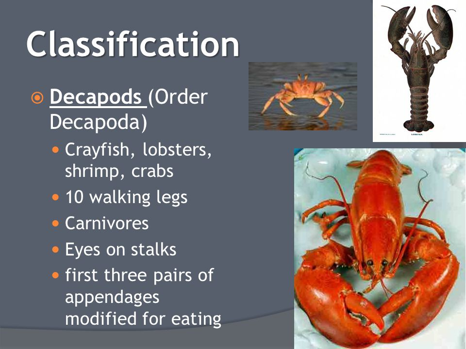 Classification  Decapods (Order Decapoda) Crayfish, lobsters, shrimp, crabs 10 walking legs Carnivores Eyes on stalks first three pairs of appendages