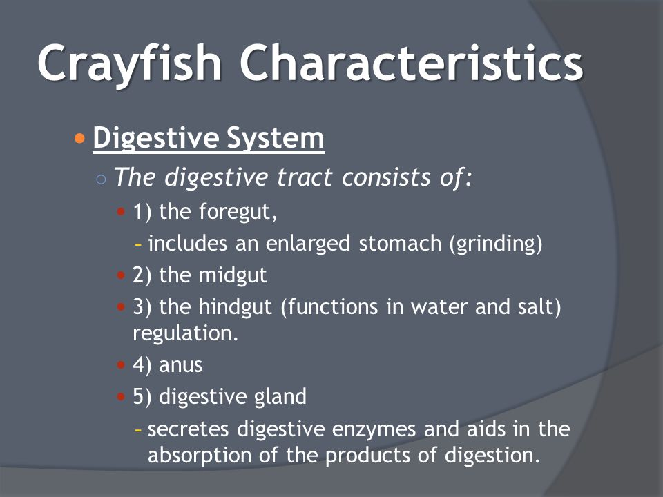 Digestive System ○ The digestive tract consists of: 1) the foregut, - includes an enlarged stomach (grinding) 2) the midgut 3) the hindgut (functions