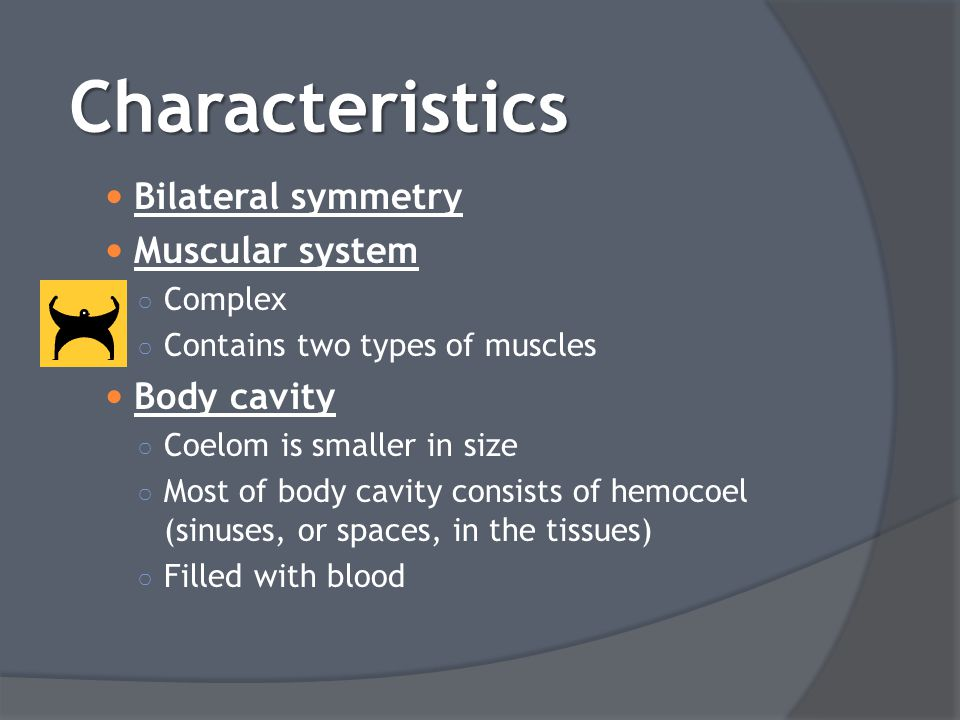Bilateral symmetry Muscular system ○ Complex ○ Contains two types of muscles Body cavity ○ Coelom is smaller in size ○ Most of body cavity consists of