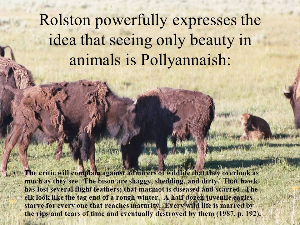 Rolston powerfully expresses the idea that seeing only beauty in animals is Pollyannaish: The critic will complain against admirers of wildlife that they overlook as much as they see.