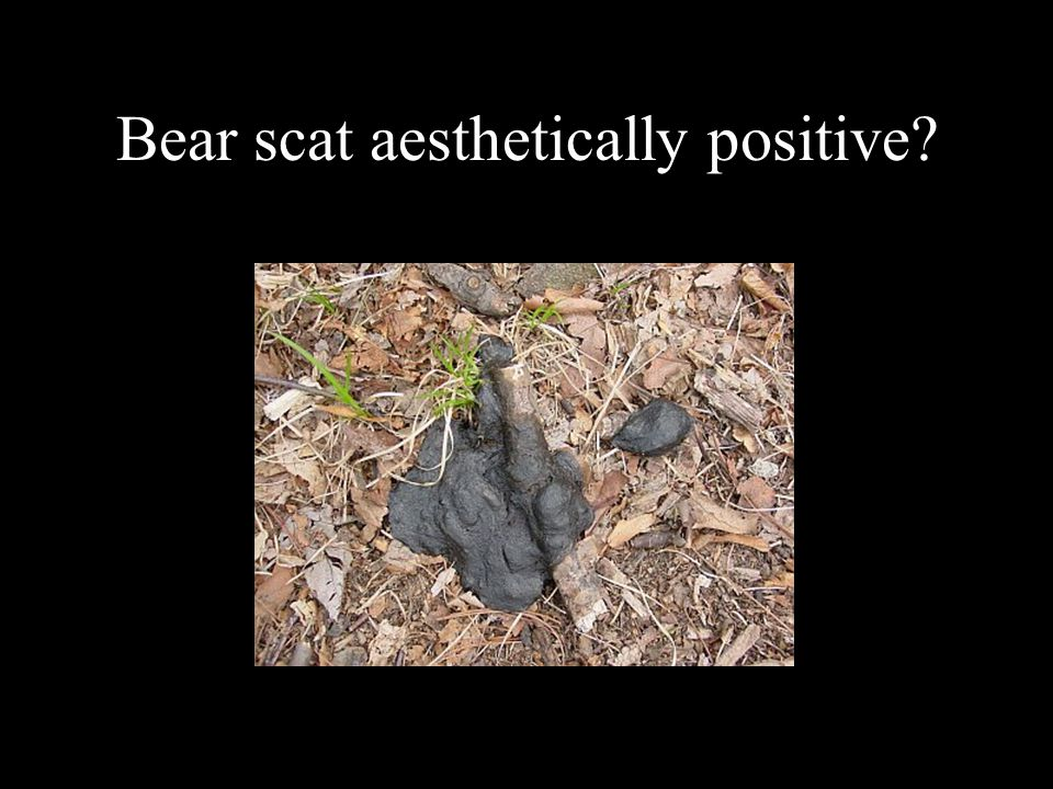 Bear scat aesthetically positive