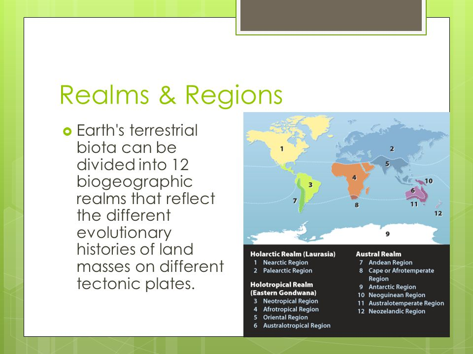 Realms & Regions  Earth's terrestrial biota can be divided into 12 biogeographic realms that reflect the different evolutionary histories of land mas
