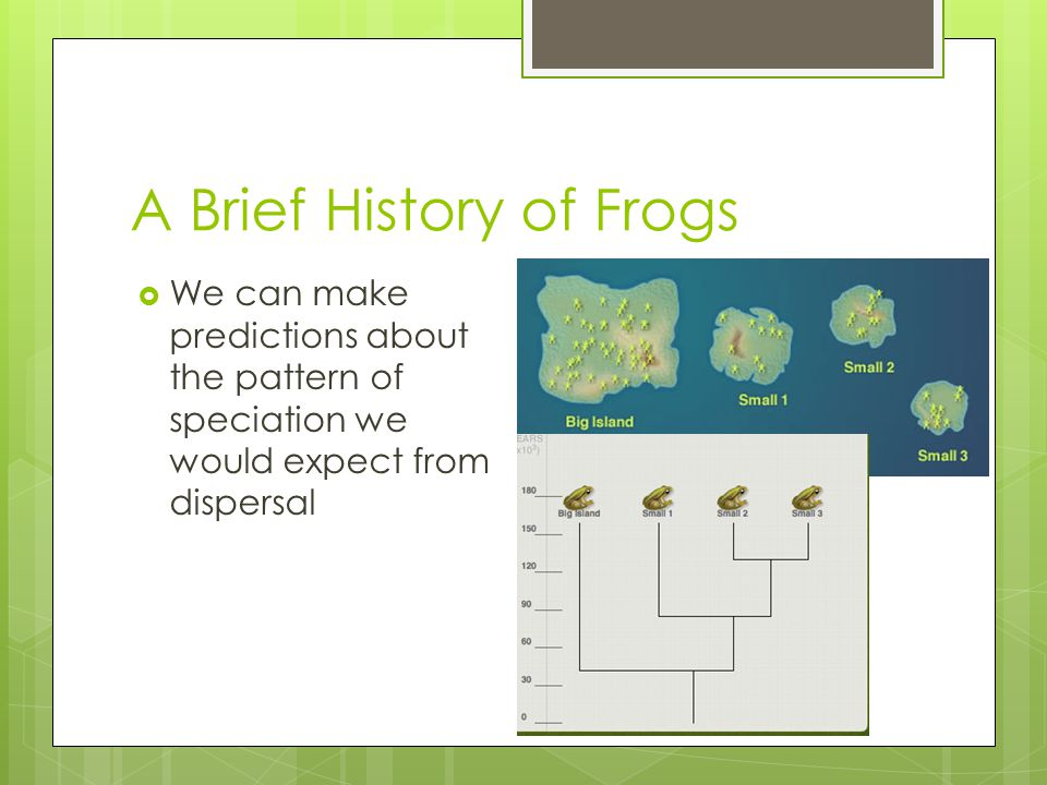 A Brief History of Frogs  We can make predictions about the pattern of speciation we would expect from dispersal