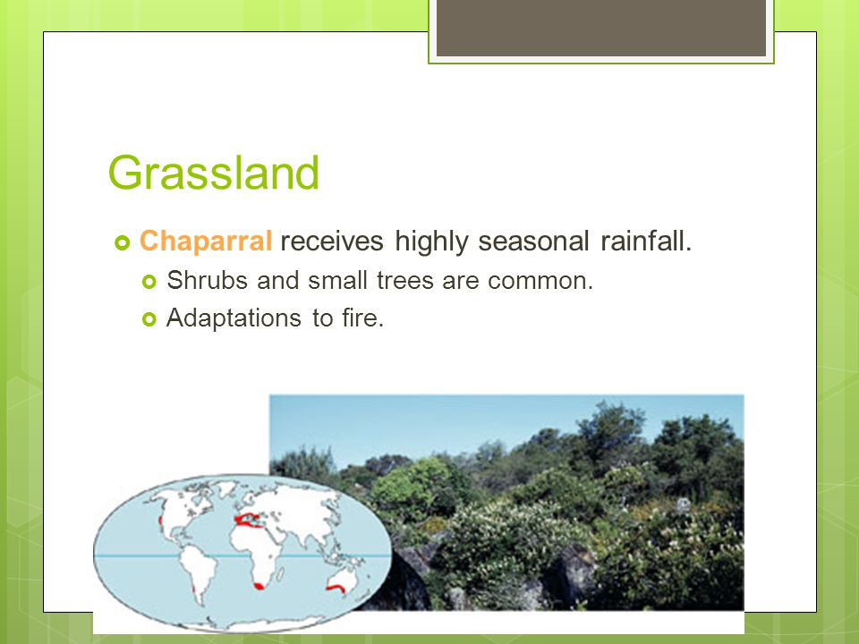 Grassland  Chaparral receives highly seasonal rainfall.  Shrubs and small trees are common.  Adaptations to fire.
