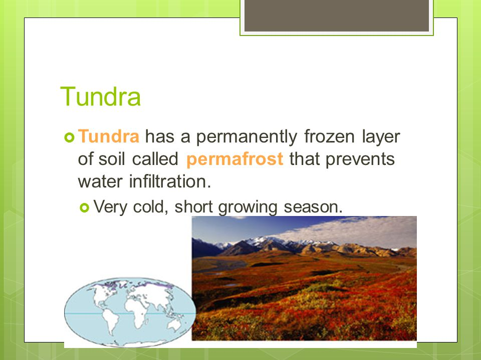 Tundra  Tundra has a permanently frozen layer of soil called permafrost that prevents water infiltration.  Very cold, short growing season.  Little