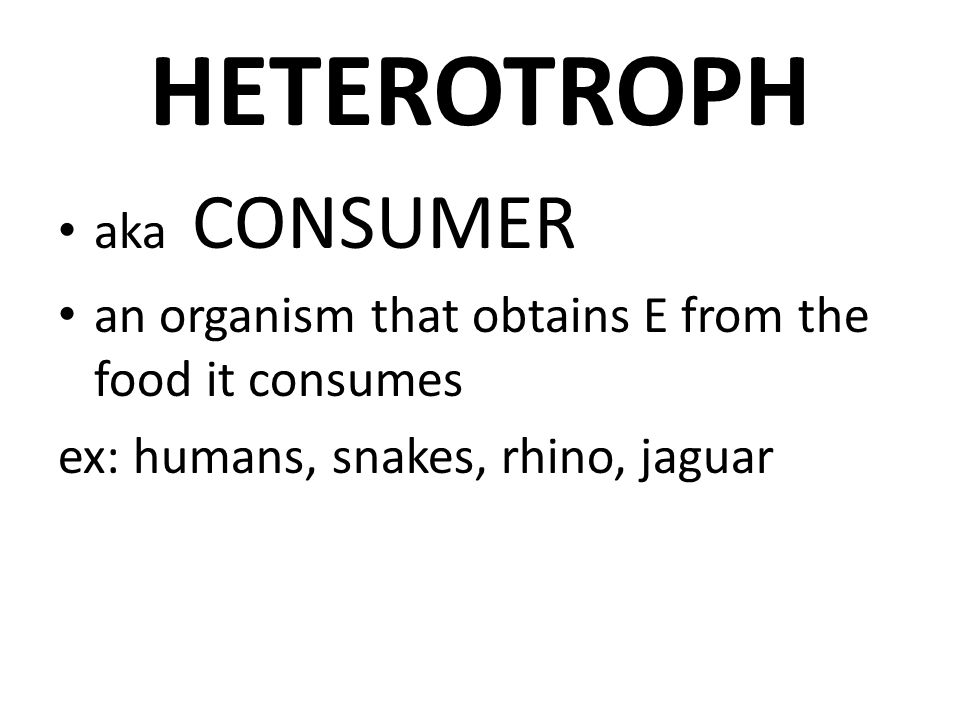 HETEROTROPH aka CONSUMER an organism that obtains E from the food it consumes ex: humans, snakes, rhino, jaguar