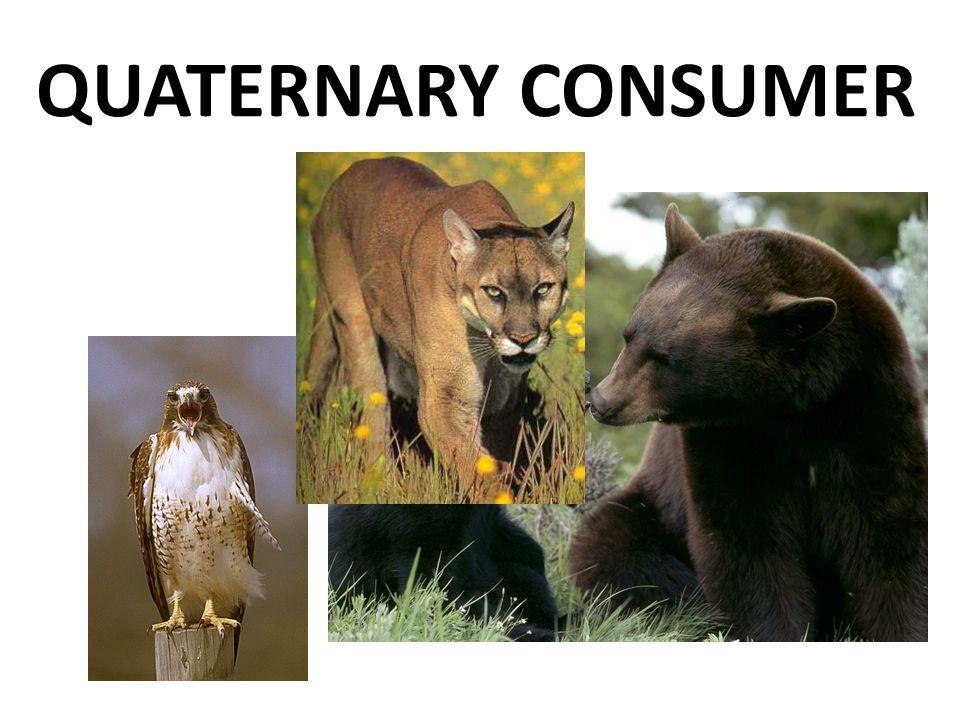 QUATERNARY CONSUMER