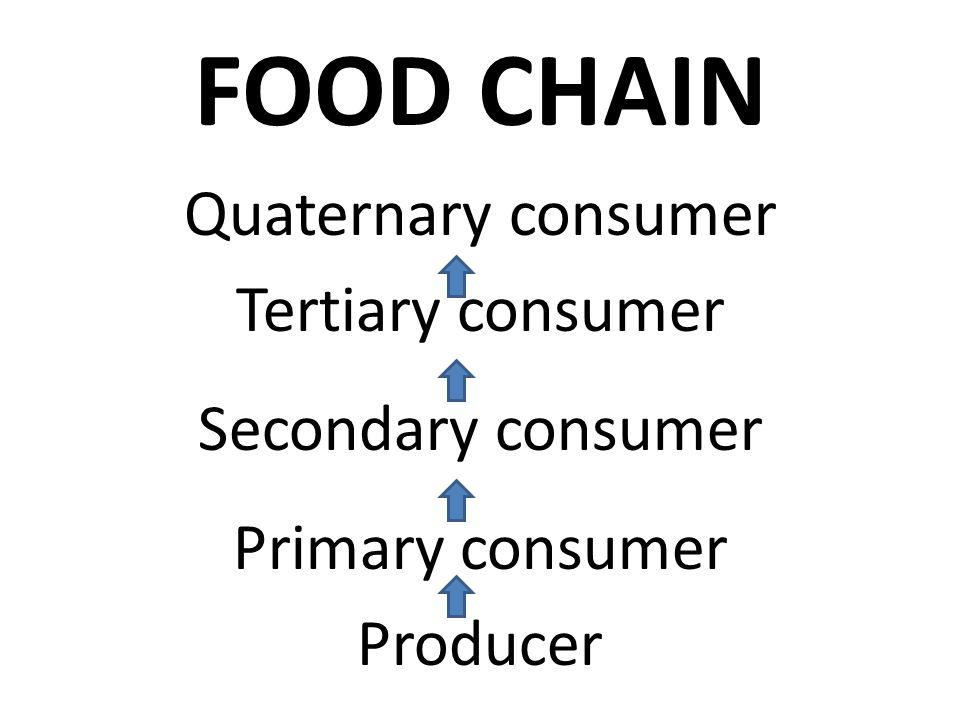 FOOD CHAIN Quaternary consumer Tertiary consumer Secondary consumer Primary consumer Producer