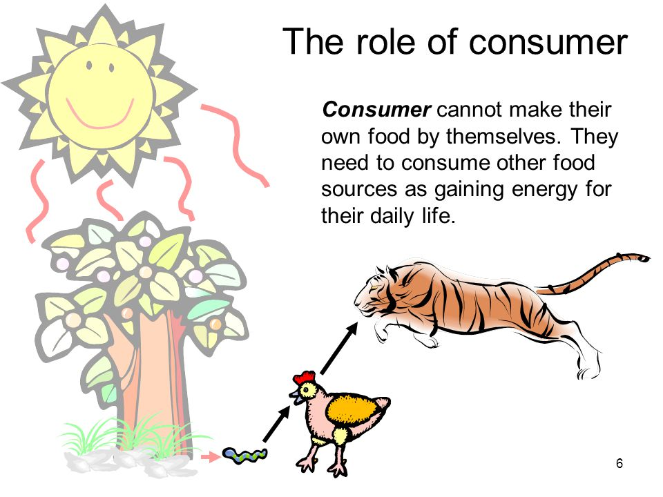 6 The role of consumer Consumer cannot make their own food by themselves.