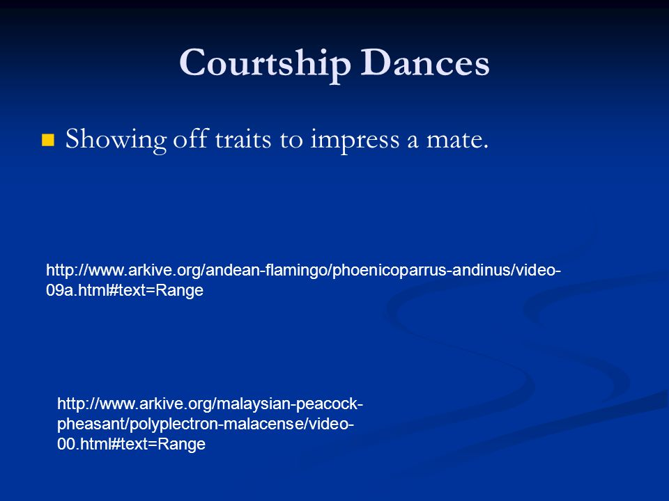 Courtship Dances Showing off traits to impress a mate. http://www.arkive.org/andean-flamingo/phoenicoparrus-andinus/video- 09a.html#text=Range http://