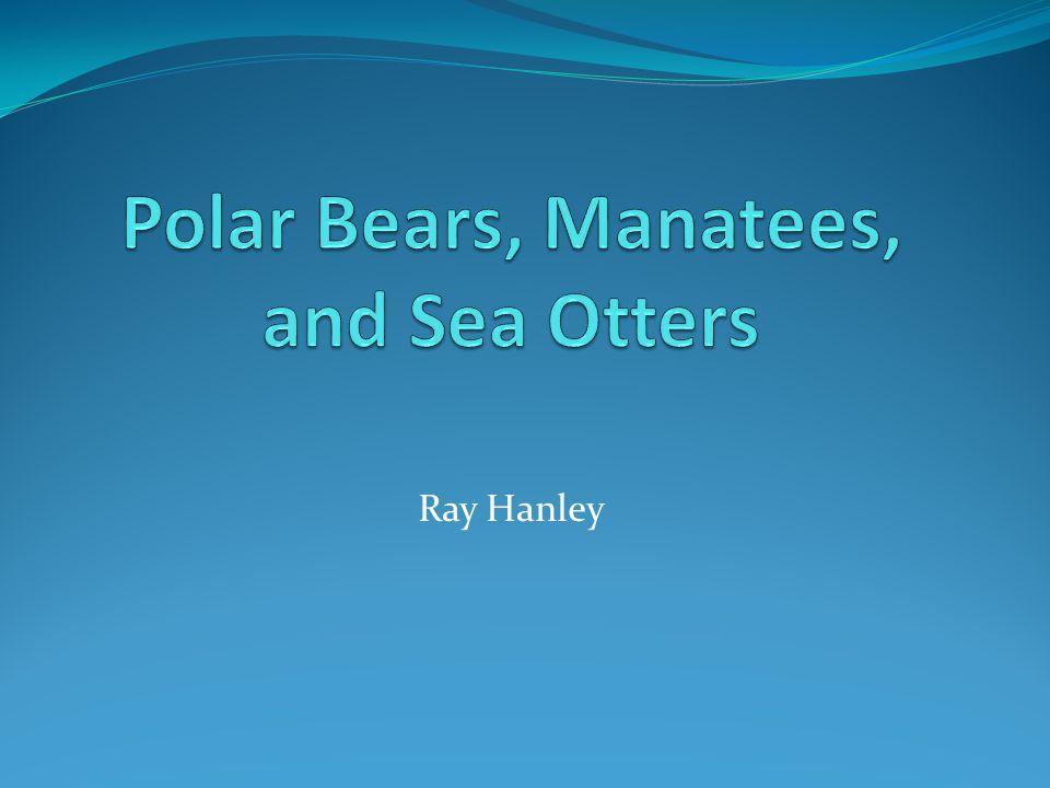 Polar Bear Status Report Status of Bears Threats Climate Change Pollution Drilling & Mining Harvesting/Hunting