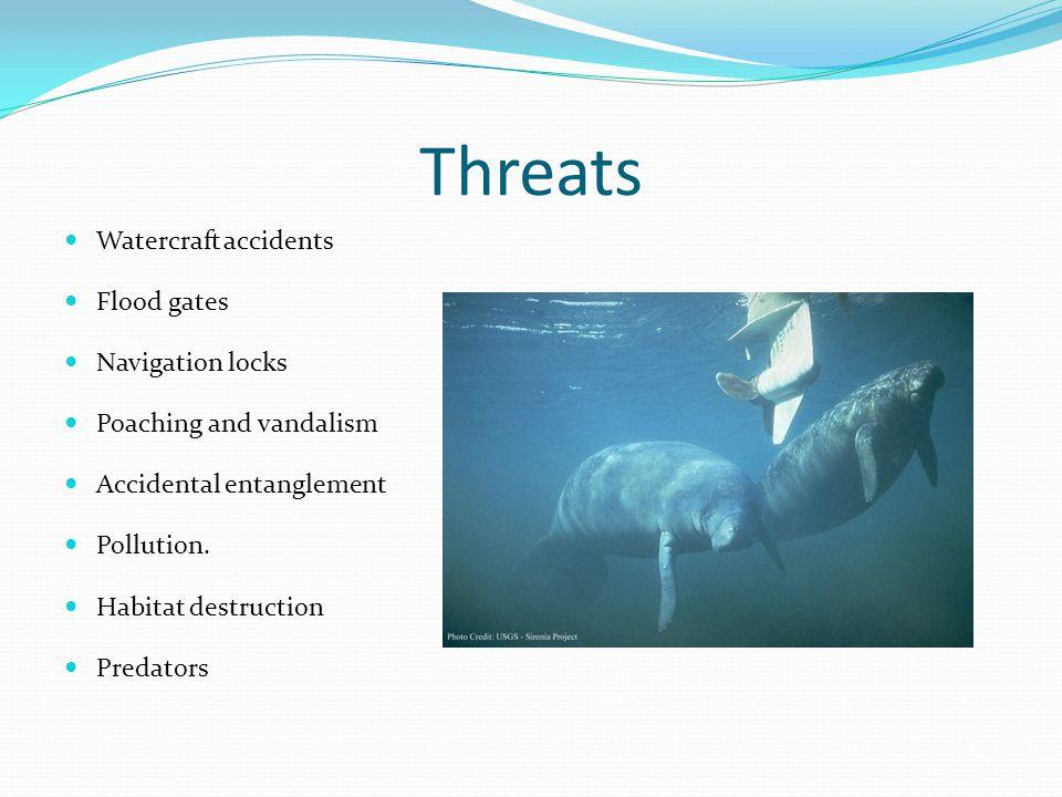 Threats Watercraft accidents Flood gates Navigation locks Poaching and vandalism Accidental entanglement Pollution.