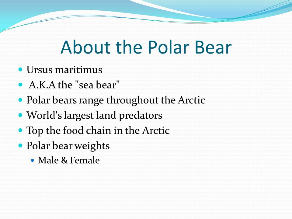 About the Polar Bear Ursus maritimus A.K.A the sea bear Polar bears range throughout the Arctic World s largest land predators Top the food chain in the Arctic Polar bear weights Male & Female