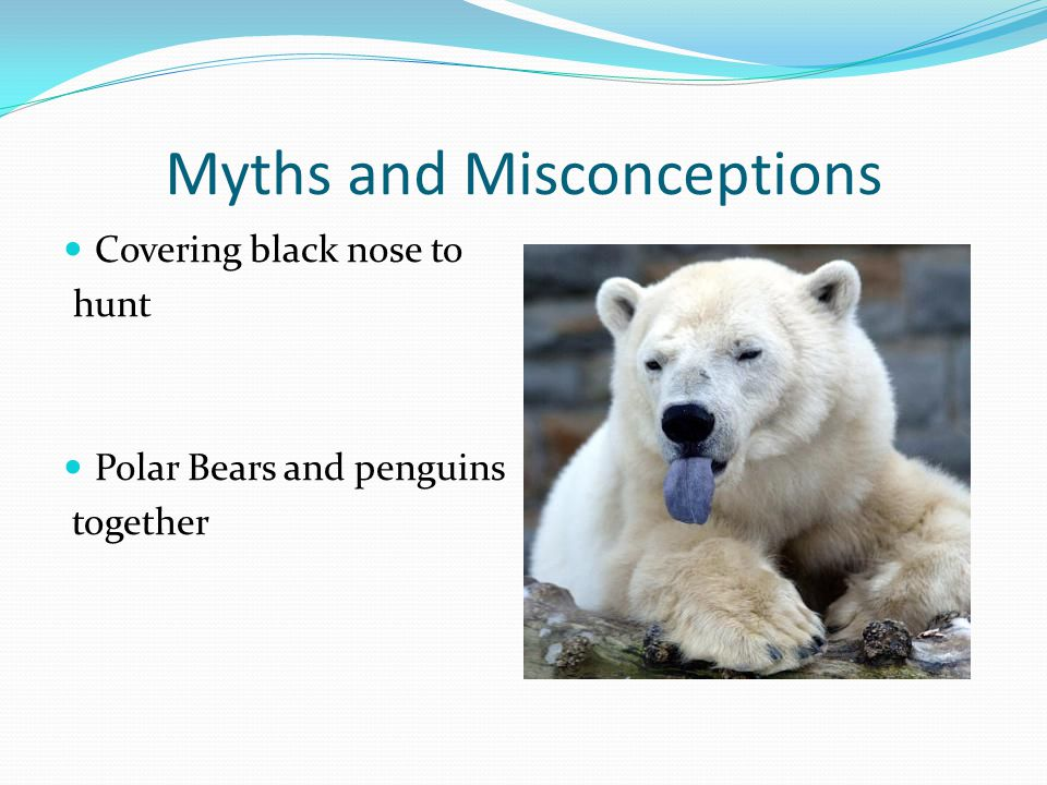 Hibernation Facts Not true hibernators Mother bear dens