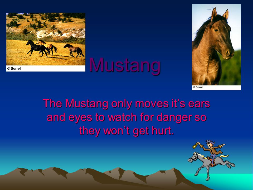 Mustang The Mustang only moves it's ears and eyes to watch for danger so they won't get hurt.