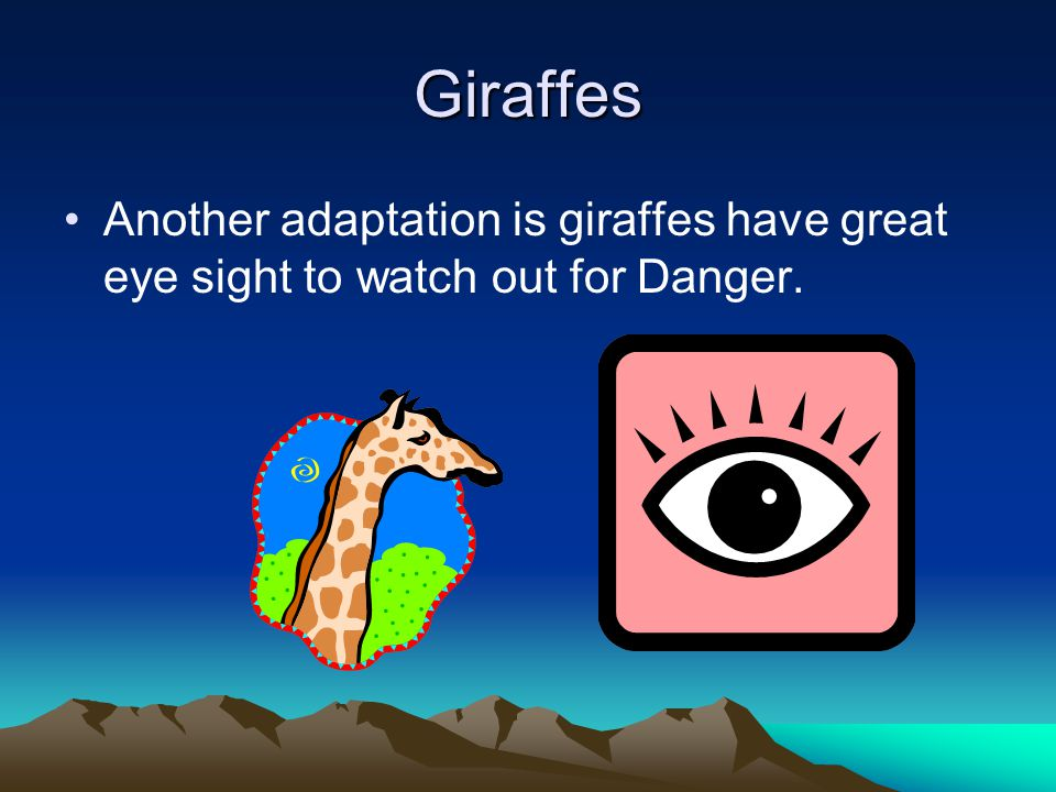 Giraffe One Adaptation is giraffes have long necks to reach their food more easily.