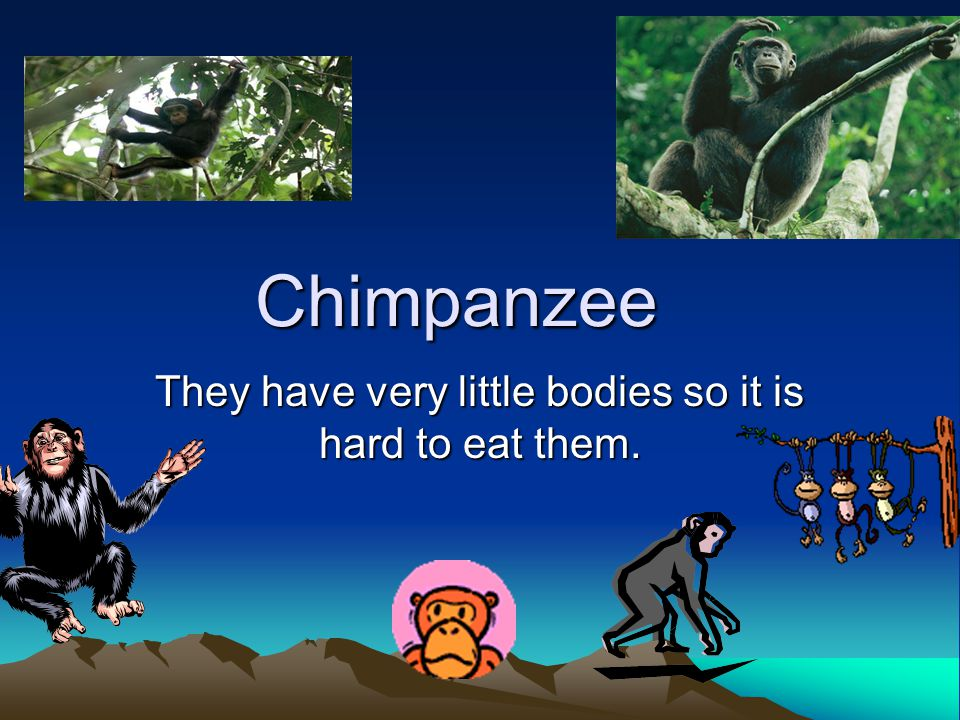 Chimpanzee They have very little bodies so it is hard to eat them.
