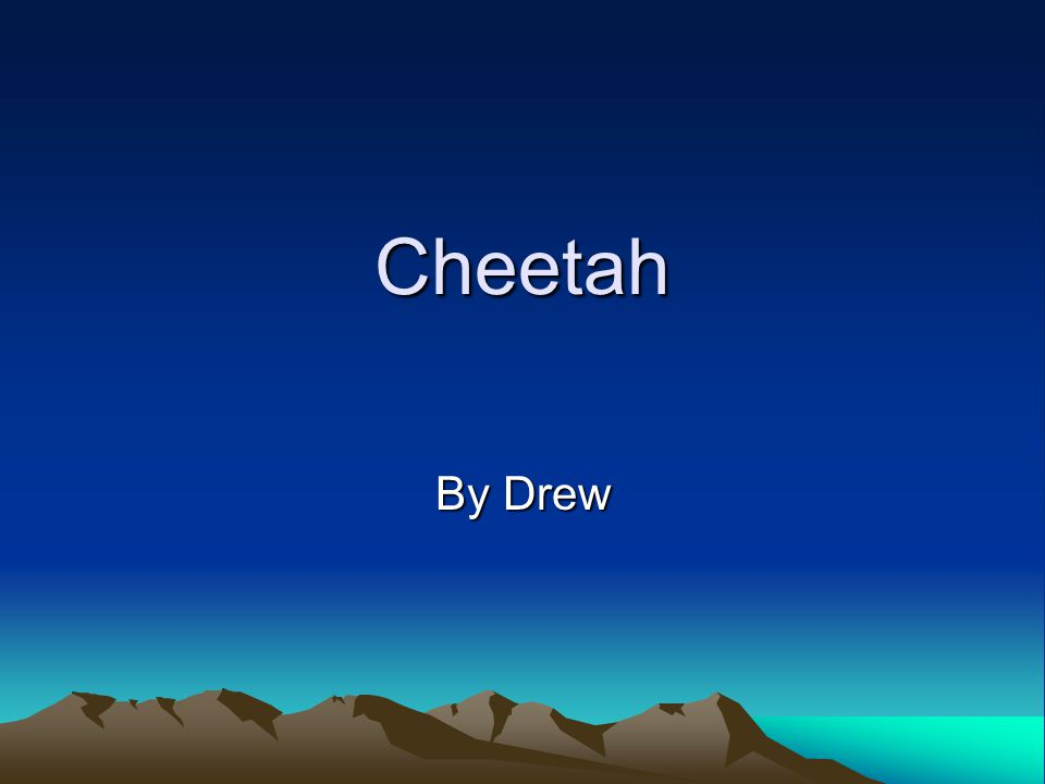Cheetah By Drew