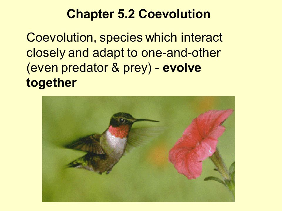 Chapter 5.2 Convergent Evolution Convergent Evolution, is development of similar adaptations in two separate species with similar niches