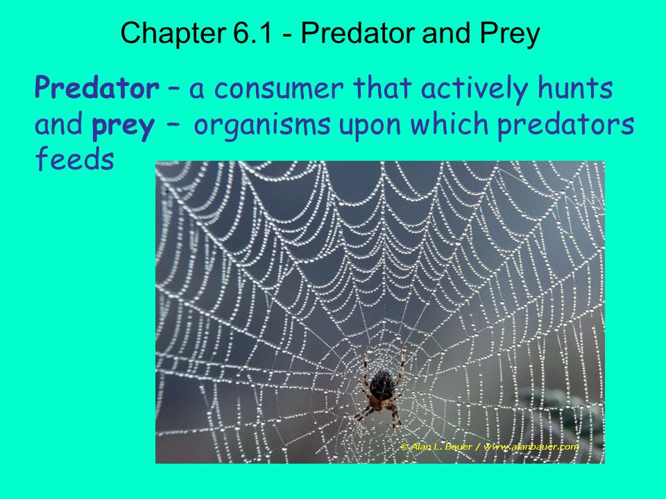 Objectives Explain the relationship size between populations sizes of predator and prey Define symbiosis and state the effects of symbiotic relationships on populations Chapter 6.1 Relationships in the Ecosystems