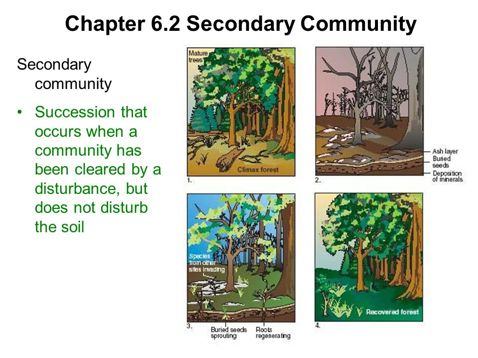 Chapter 6.2 Climax Community Climax community Community that does not undergo further succession