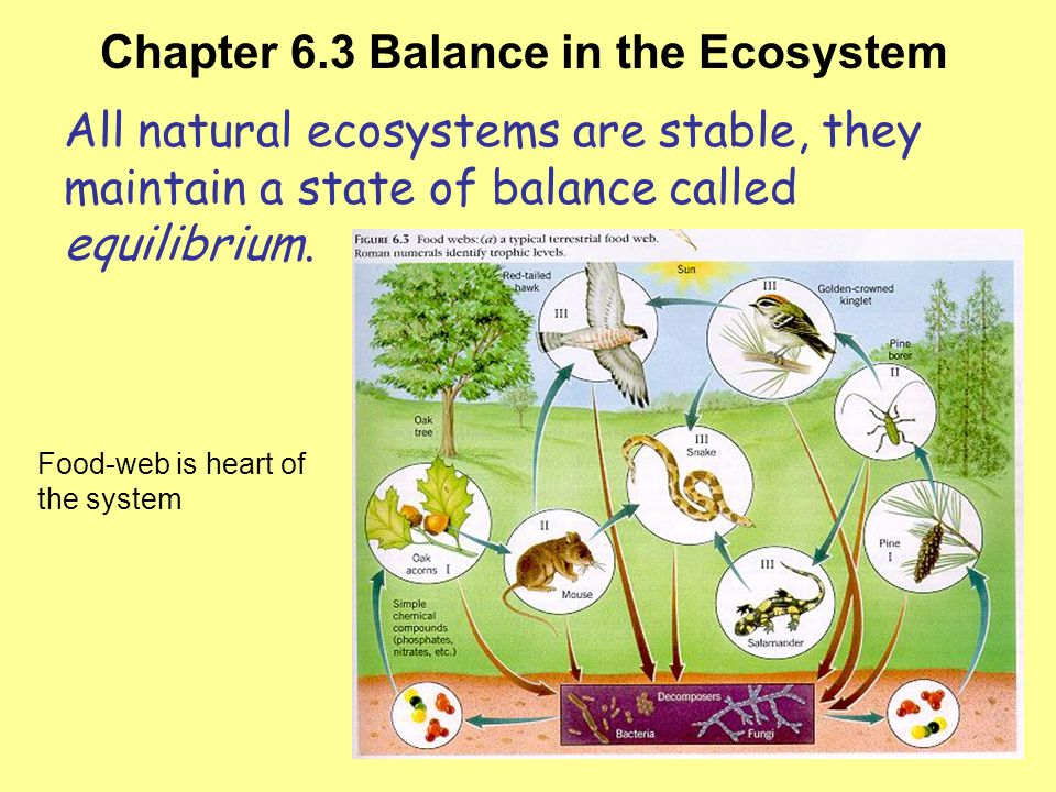 Chapter 6.3 Balance in the Ecosystem Objectives Examine the concepts of ecosystem balance and explain how humans affect that balance.